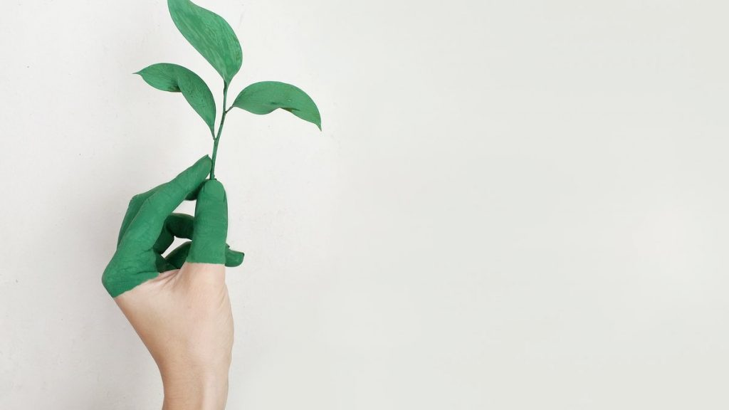 The 15 Most Environmentally Friendly & Sustainable Companies (2021)